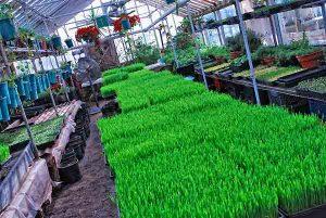 Growing Power greenhouse